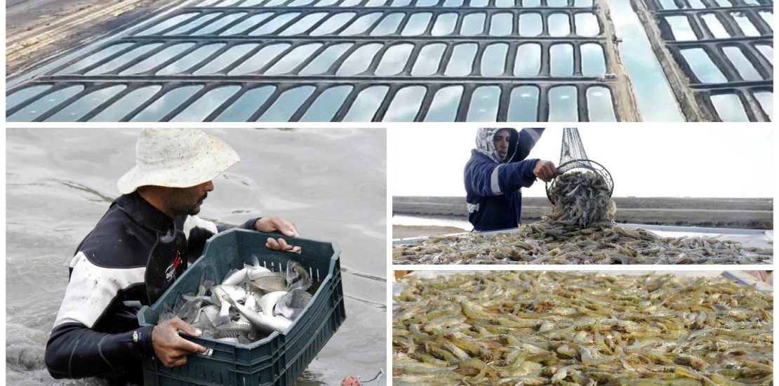SME Consulting Egypt fish farms